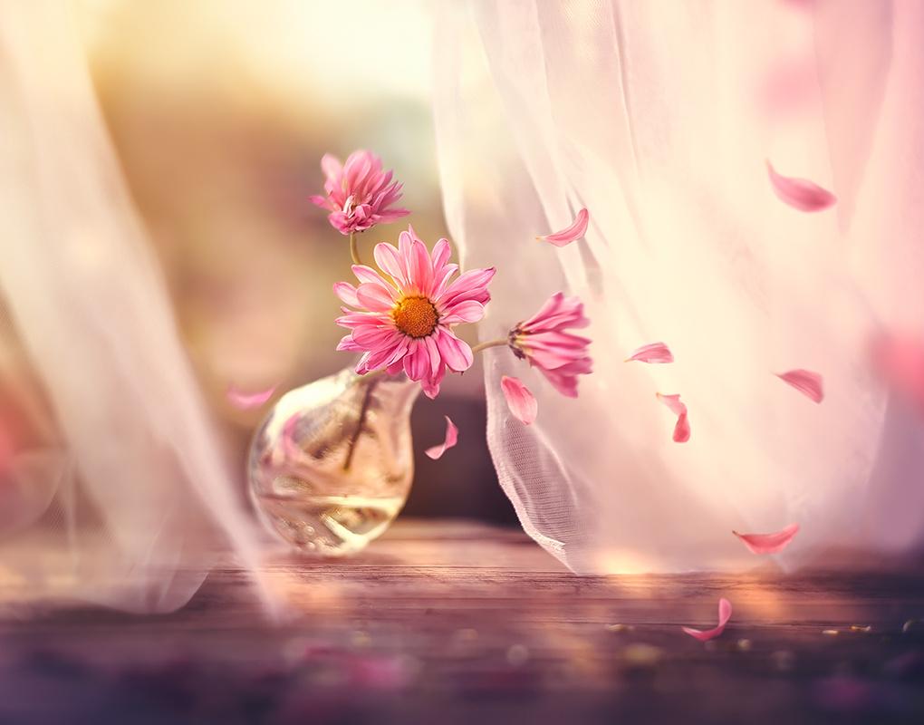 Breath of the wind by Ashraful Arefin