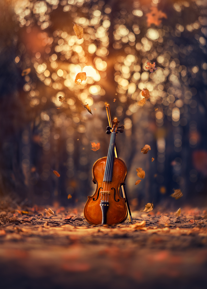 Autumn symphony by Ashraful Arefin