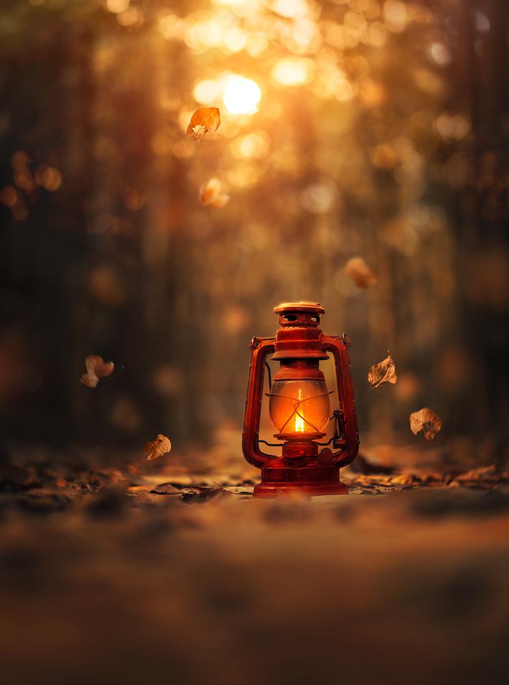 Light of Autumn by Ashraful Arefin