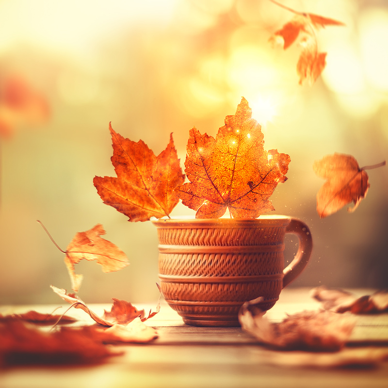 Ode to Autumn by Ashraful Arefin