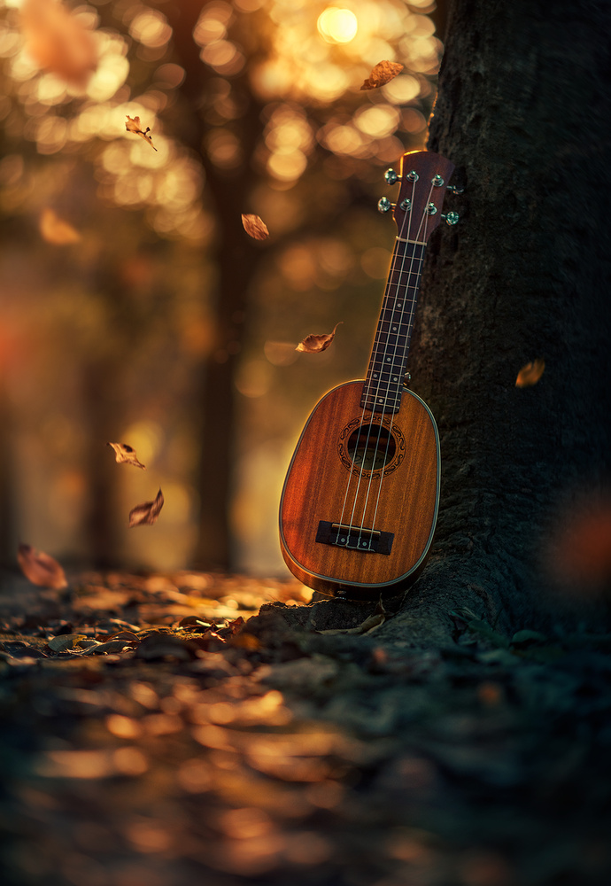 One last song of Autumn by Ashraful Arefin