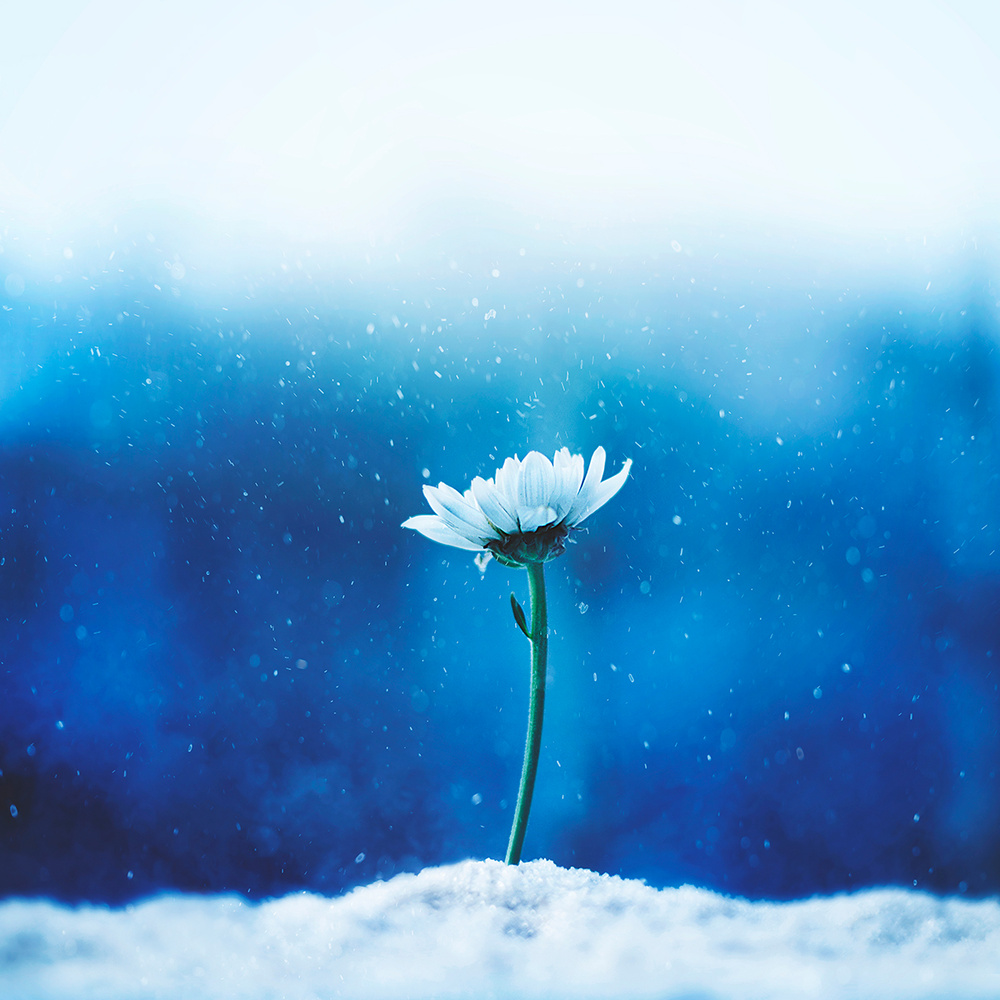 Standing strong by Ashraful Arefin