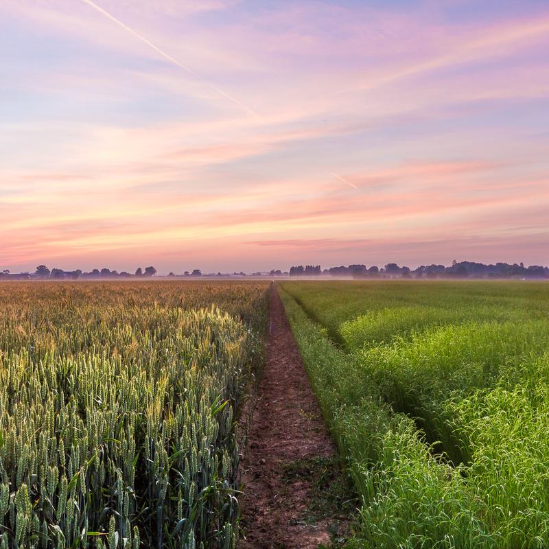 Fields by Jean Lubtchansky