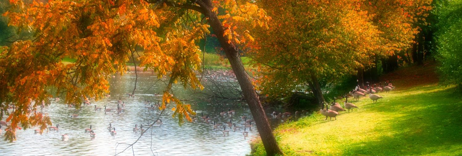 Autum Pond Apple Orchard by Dana Kyler
