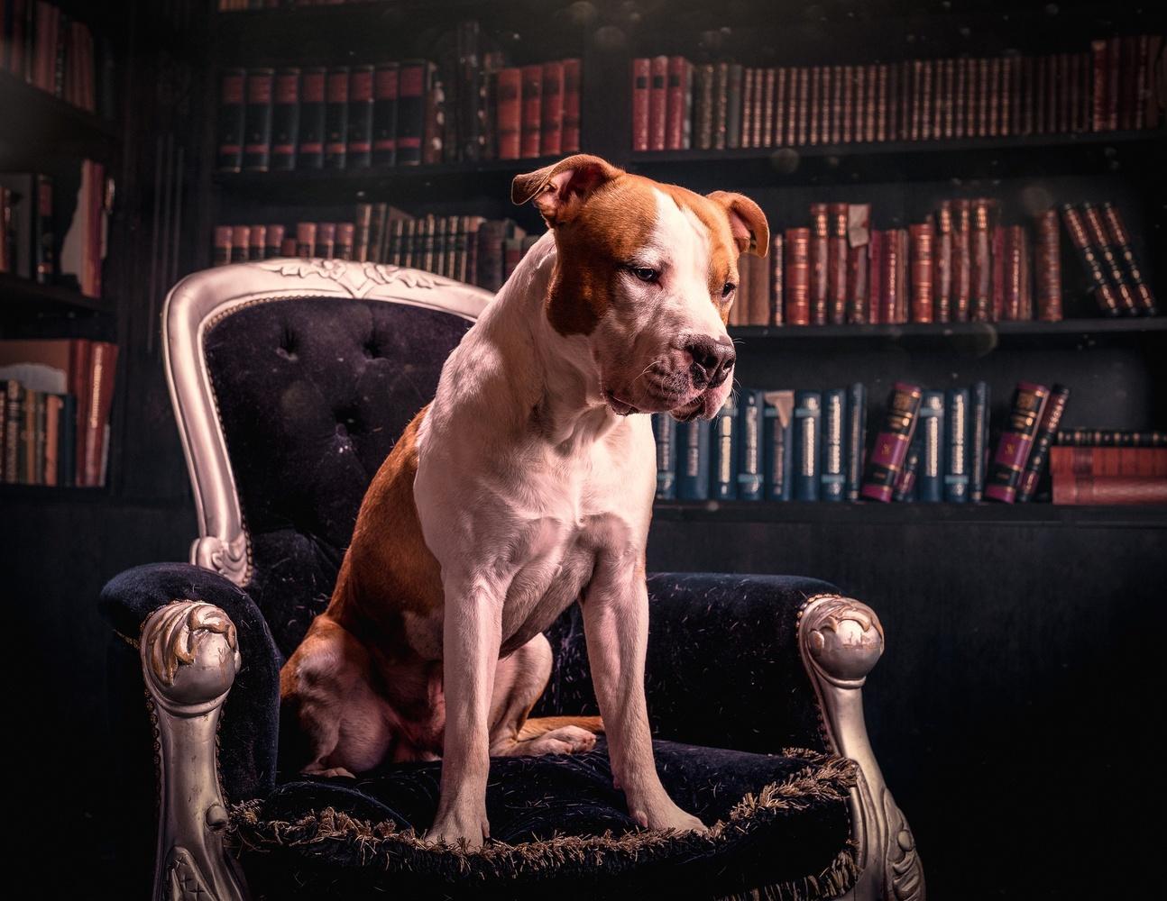 Library dog by Juhamatti Vahdersalo