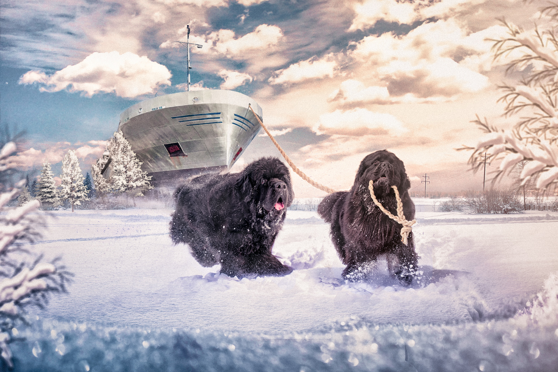 Fetch! by Juhamatti Vahdersalo