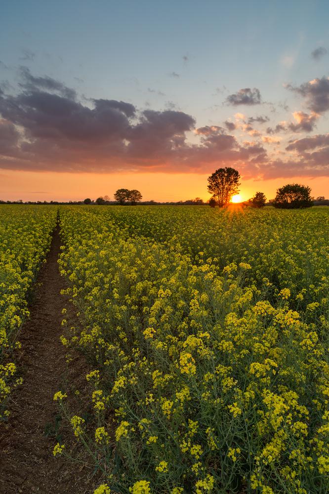 Out in the Fields by Steffen Eidem