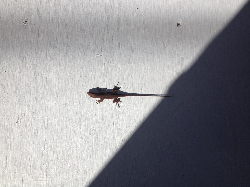 Lizard by Agnieszka Brissey