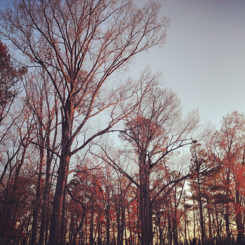 Trees by Agnieszka Brissey