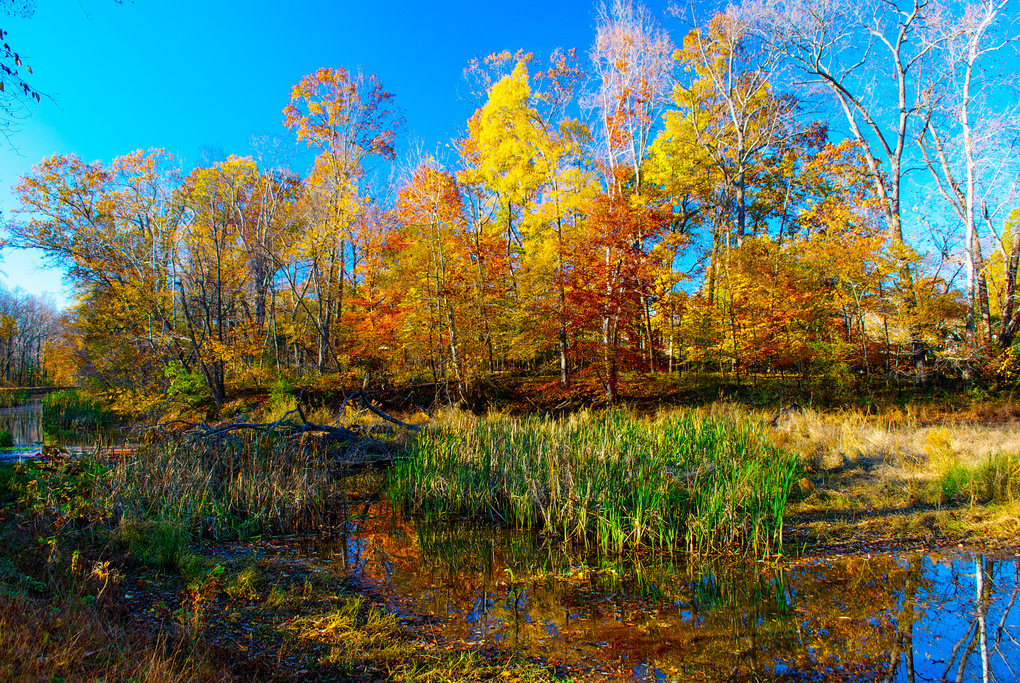 Fall Colors by Travis Manning