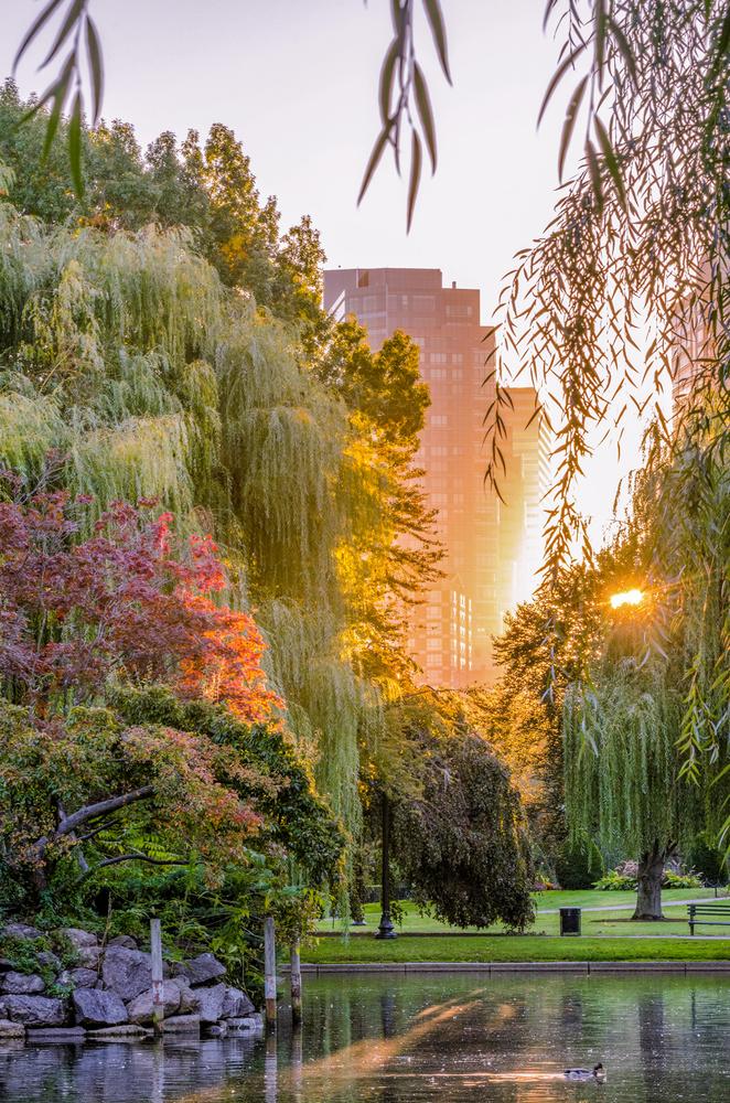 Boston's Public Garden by mike ste. marie