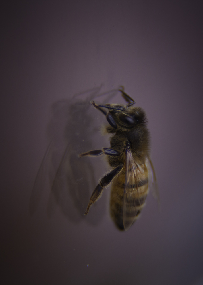 Winter Bee by Alicia Lockwood