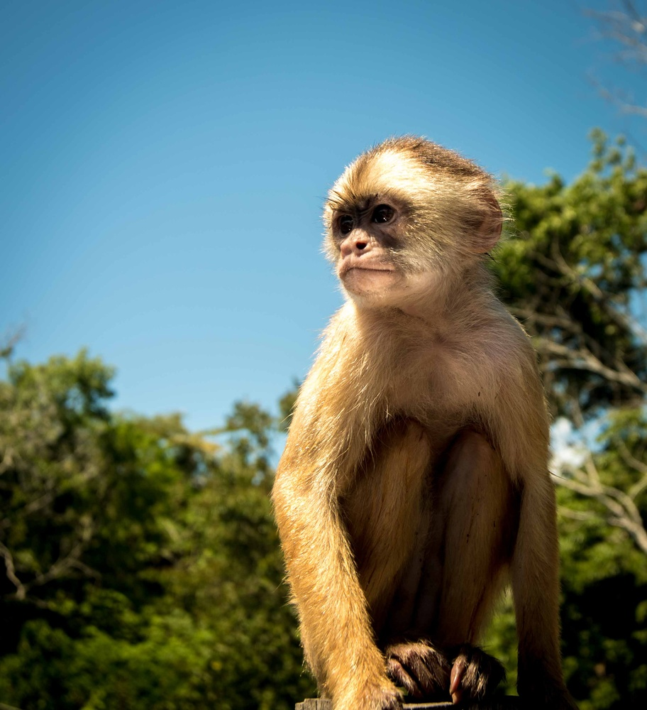 Monkey Guard by Stuart Miles