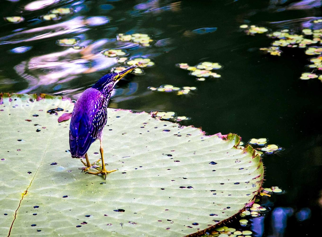 Bird on a Pad by Stuart Miles