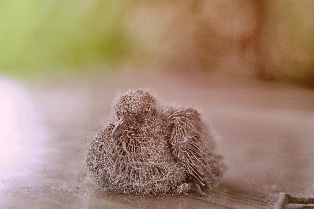 The Astray Bird by Onasis Gaisie