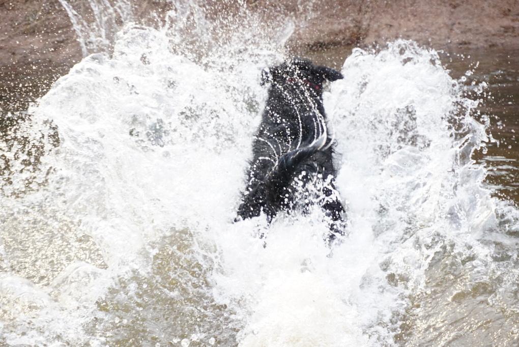 Dive in the water by Sree Kala Kadiani