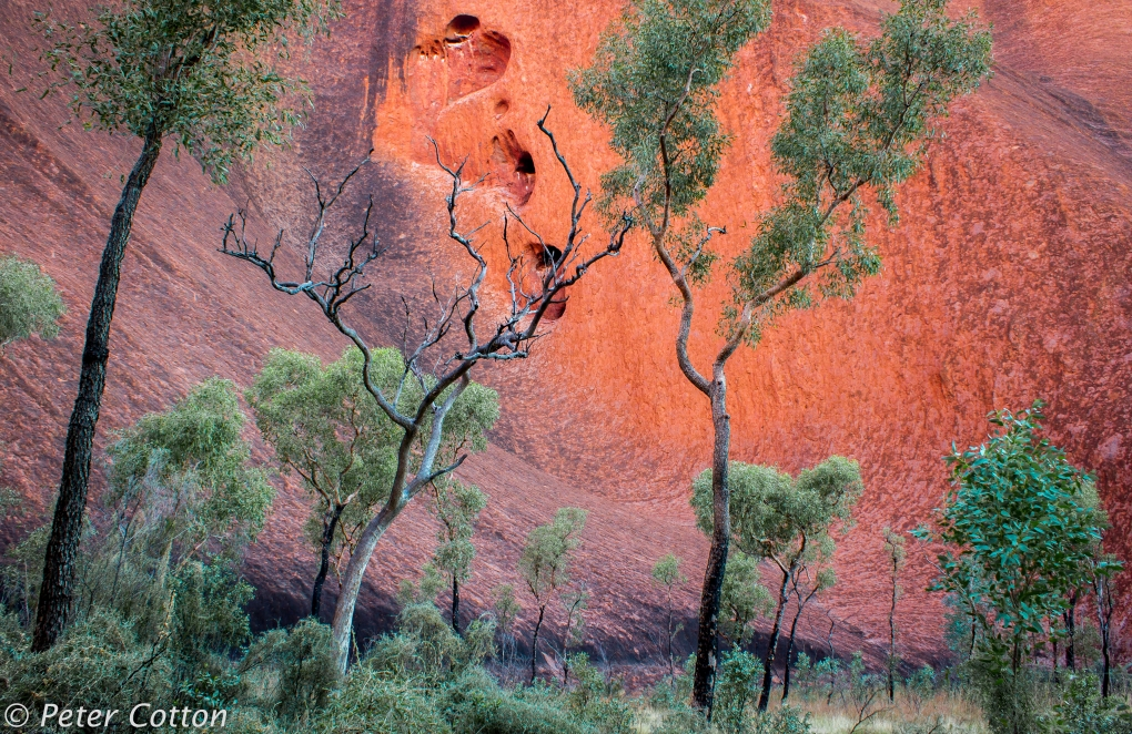 At Matitjulu Water Hole by Peter Cotton