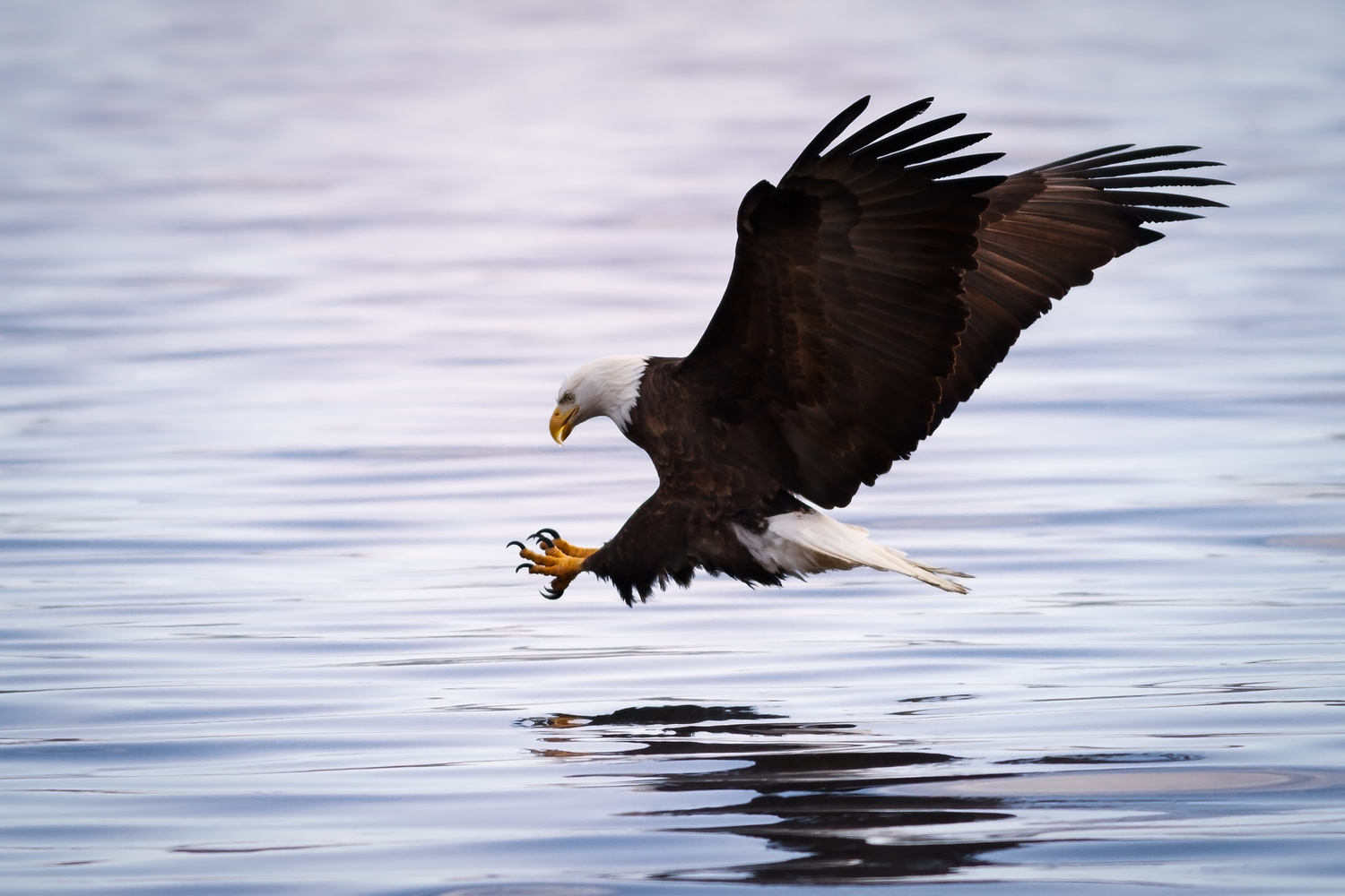 The Eagle, an American Tresure by Troy Marcy