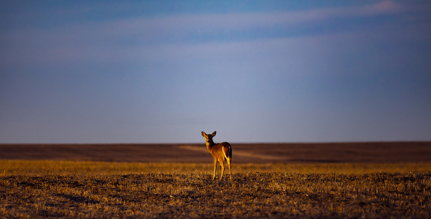 Doe in the Field by Troy Marcy