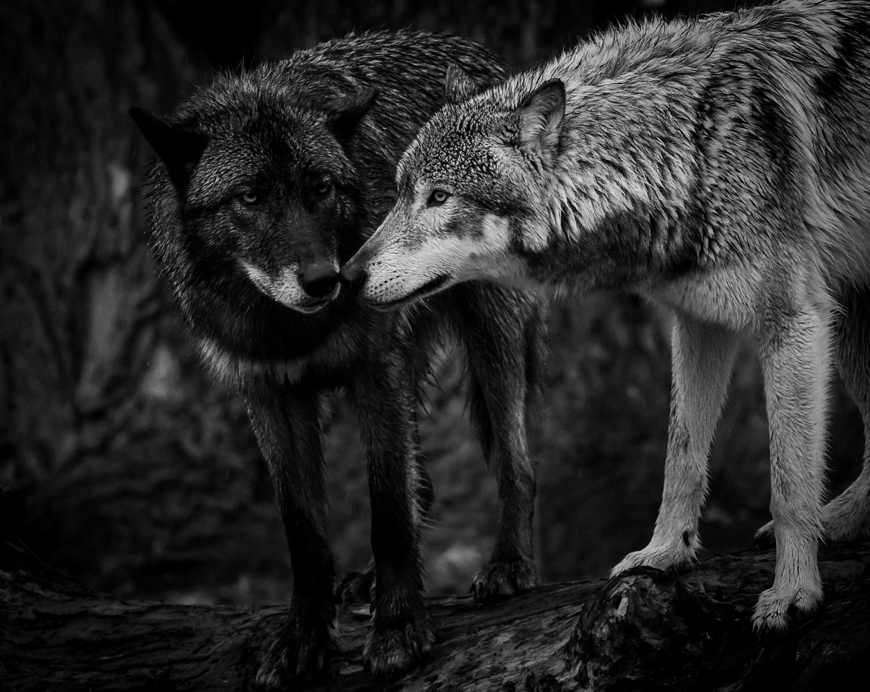 Nose to Nose by Troy Marcy