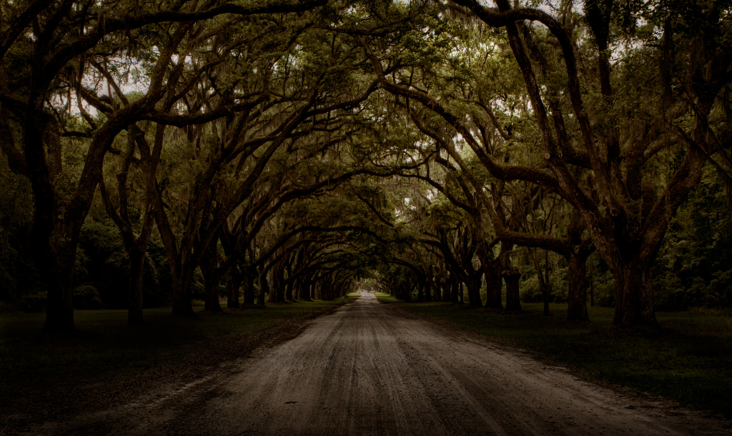 Savannah Live Oaks by Troy Marcy