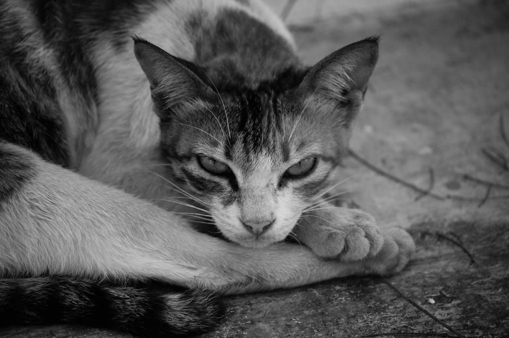 Pet portrait by Harinandan Rajeev