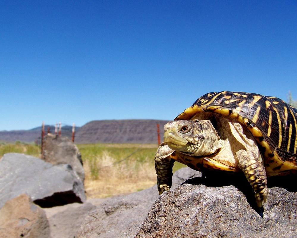 Free Range Turtle by Renee Olmsted