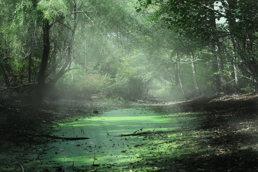 Morning Bog by Chris William Williams