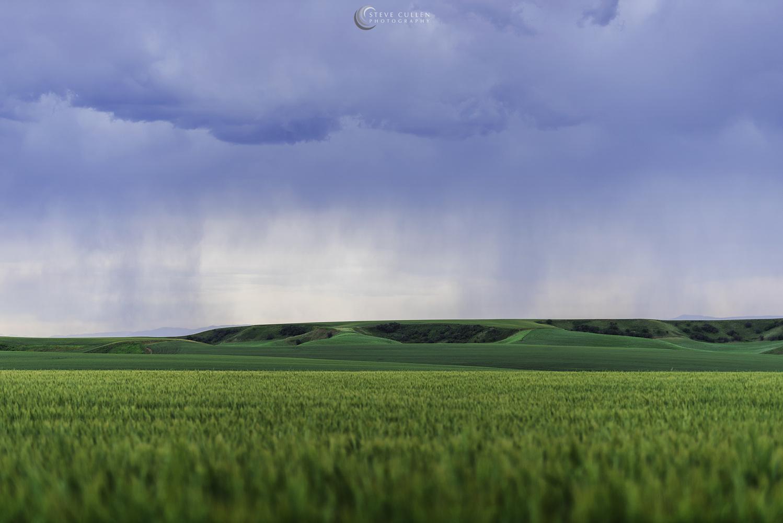 Fields of Green by Steve Cullen