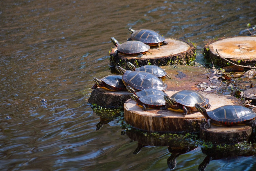 Turtles in the Sun by Keith Garrant