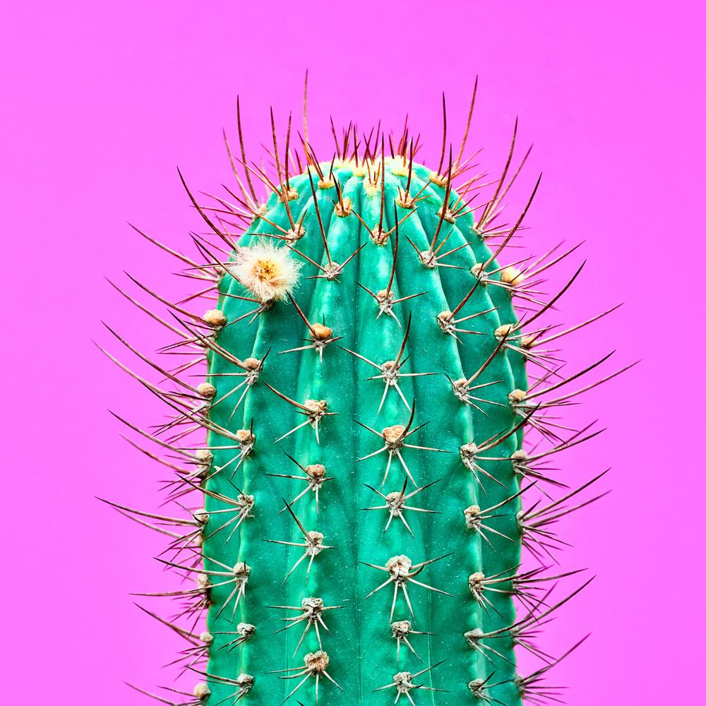 Fashion Cactus by Evgenij Pavlovich