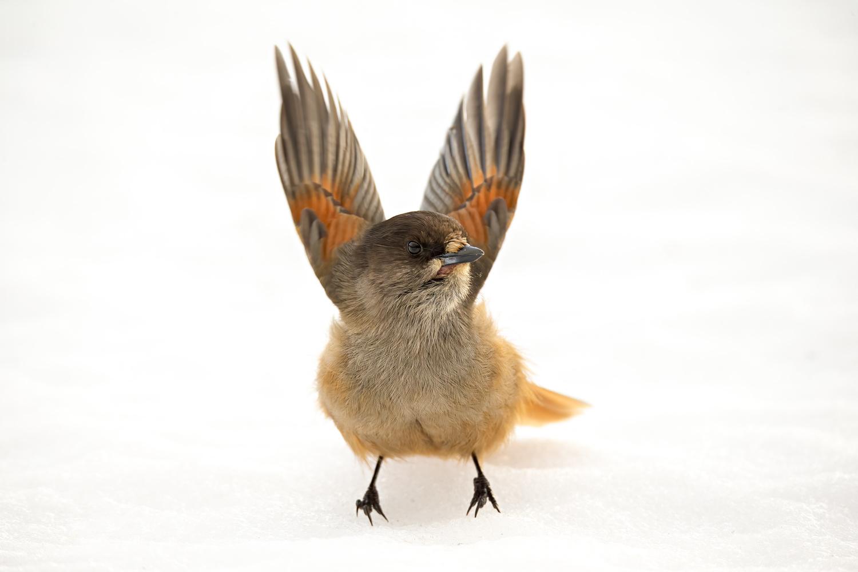 Fly away by Howard Ashton-Jones