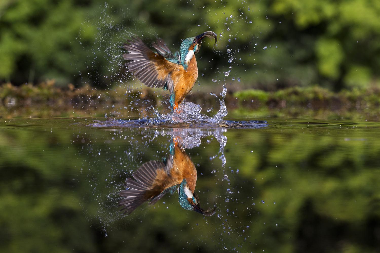 Take off by Howard Ashton-Jones