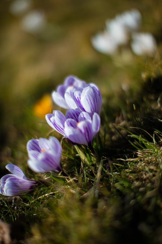 Spring by Jacob Johansson
