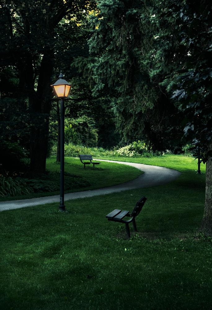 Narnian Paths by David J. Fulde