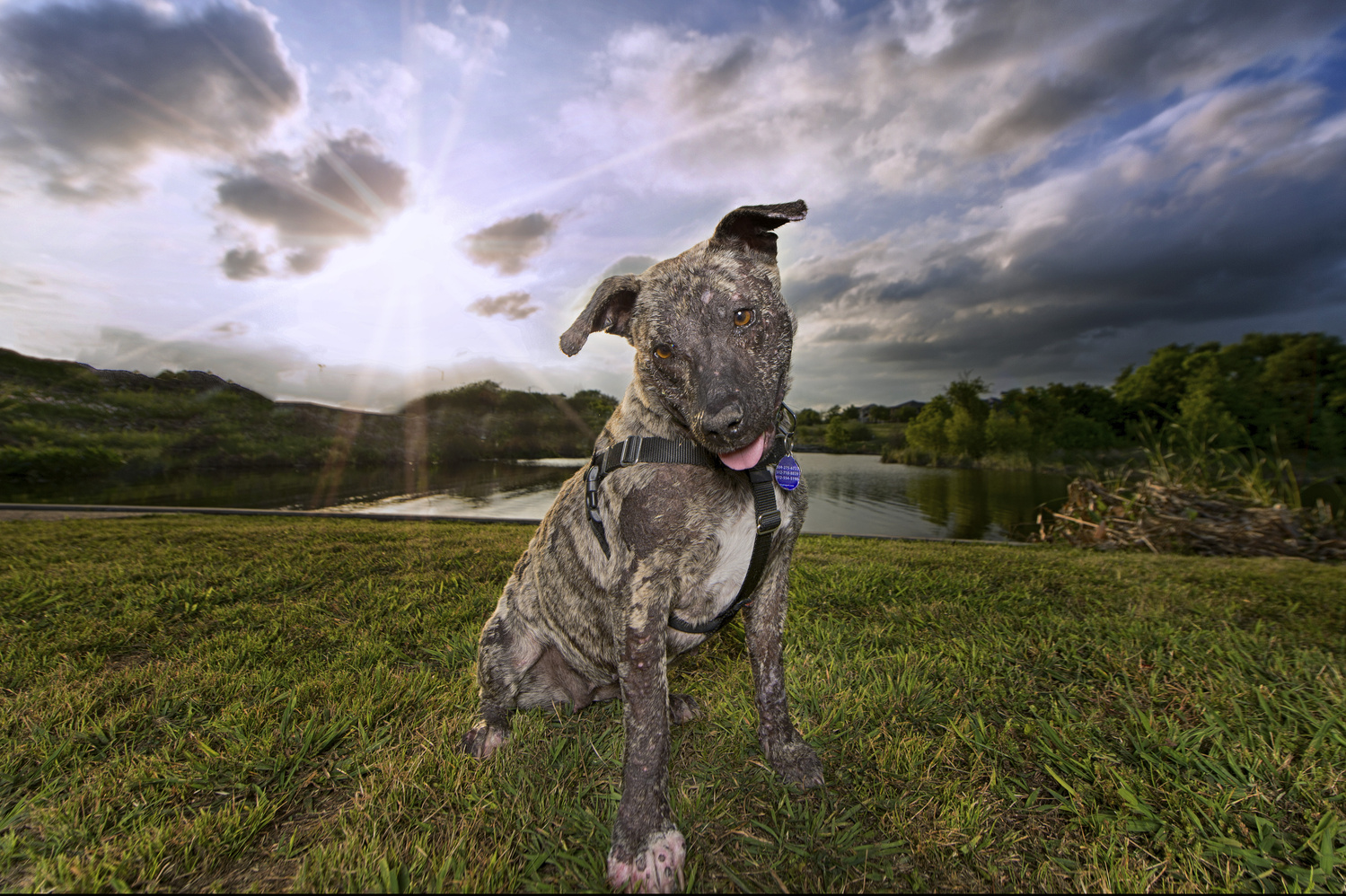 Rescue Dog Lucille by Jesse Drohen