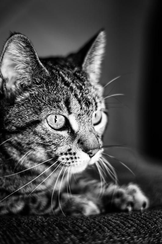 Felis catus by Robert Geeck