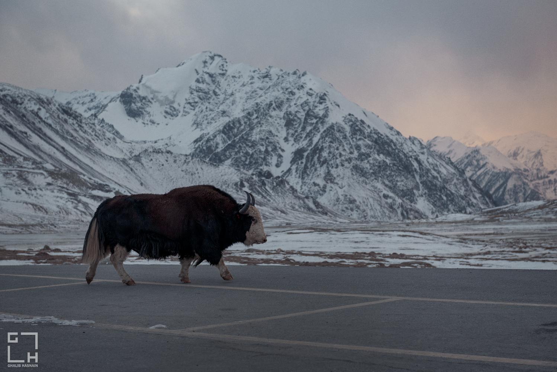 China Border by Ghalib Hasnain