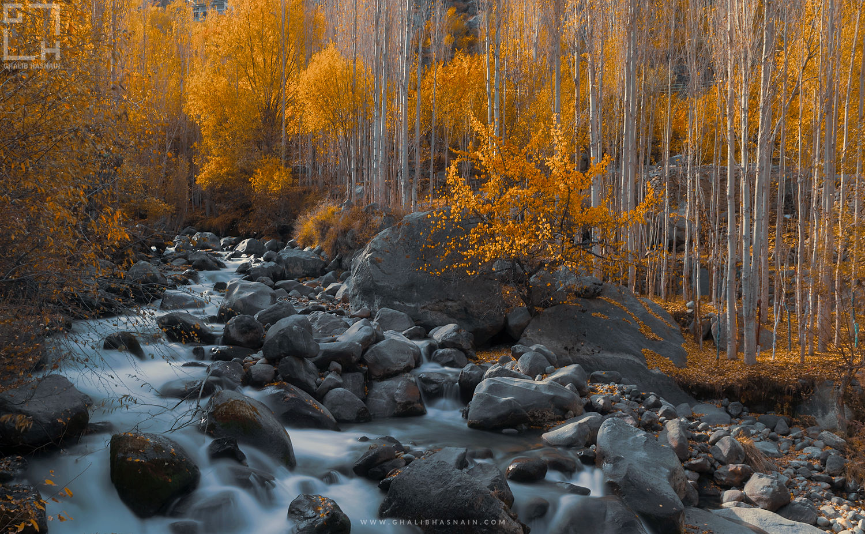 The Fall by Ghalib Hasnain