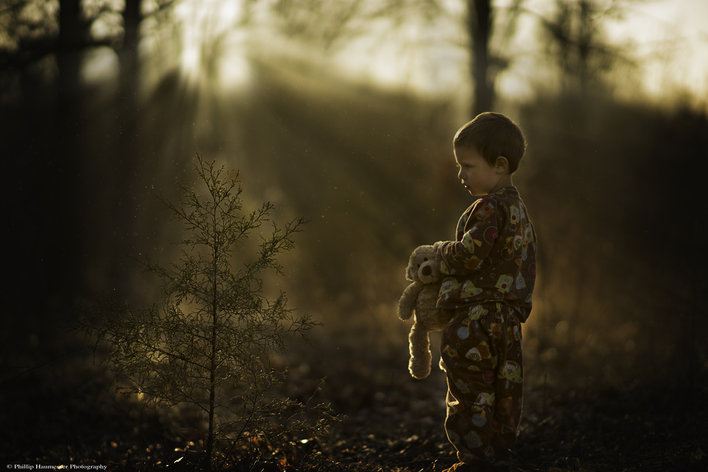 Morning Curiosity by Phillip Haumesser
