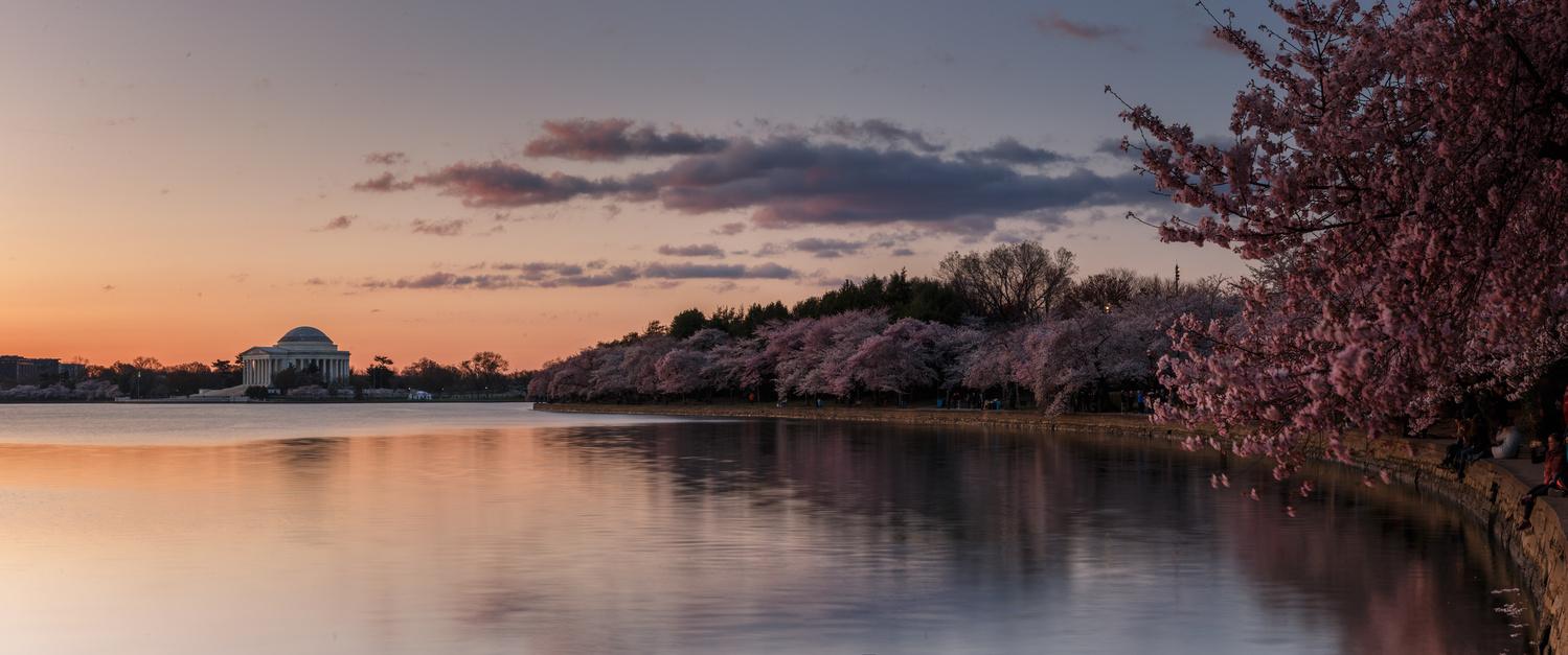 Cherry Blossom Sunrise by Mark Alan Andre