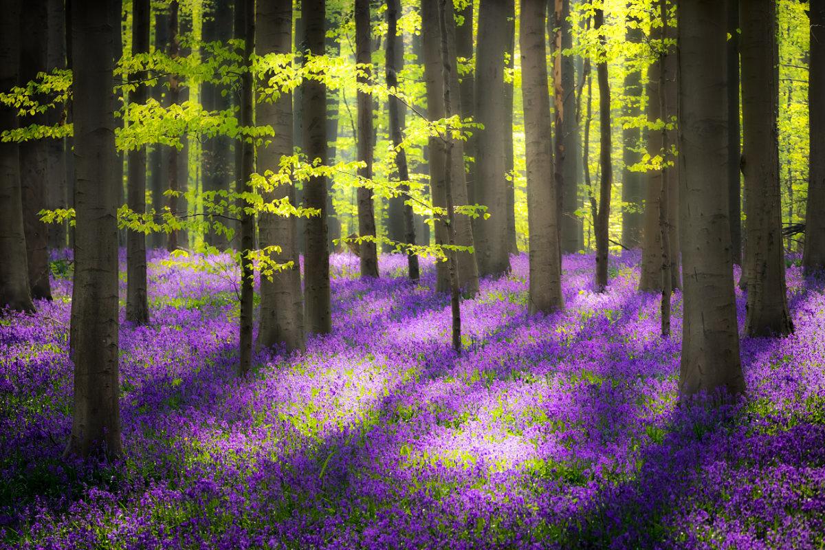 Flower Carpet by Jens Sieckmann
