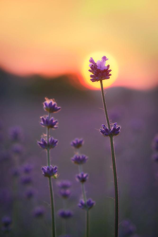 Sun Flower by Jens Sieckmann