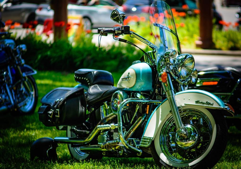 Harley by Binky Bass