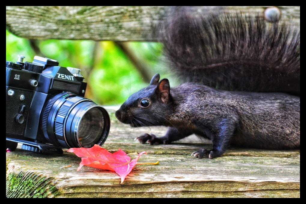 Squirrels like film. by Binky Bass