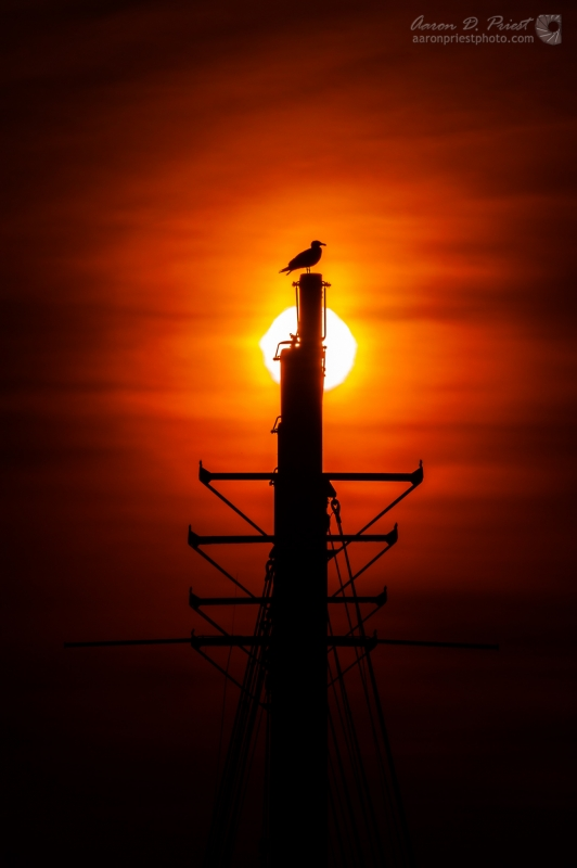 Seagull on the Margaret Todd by Aaron Priest
