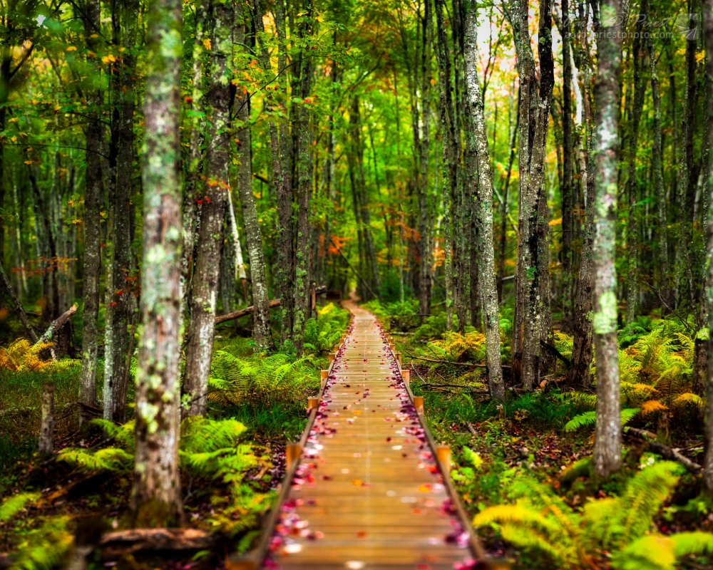 Autumn Leaves on Boardwalk by Aaron Priest