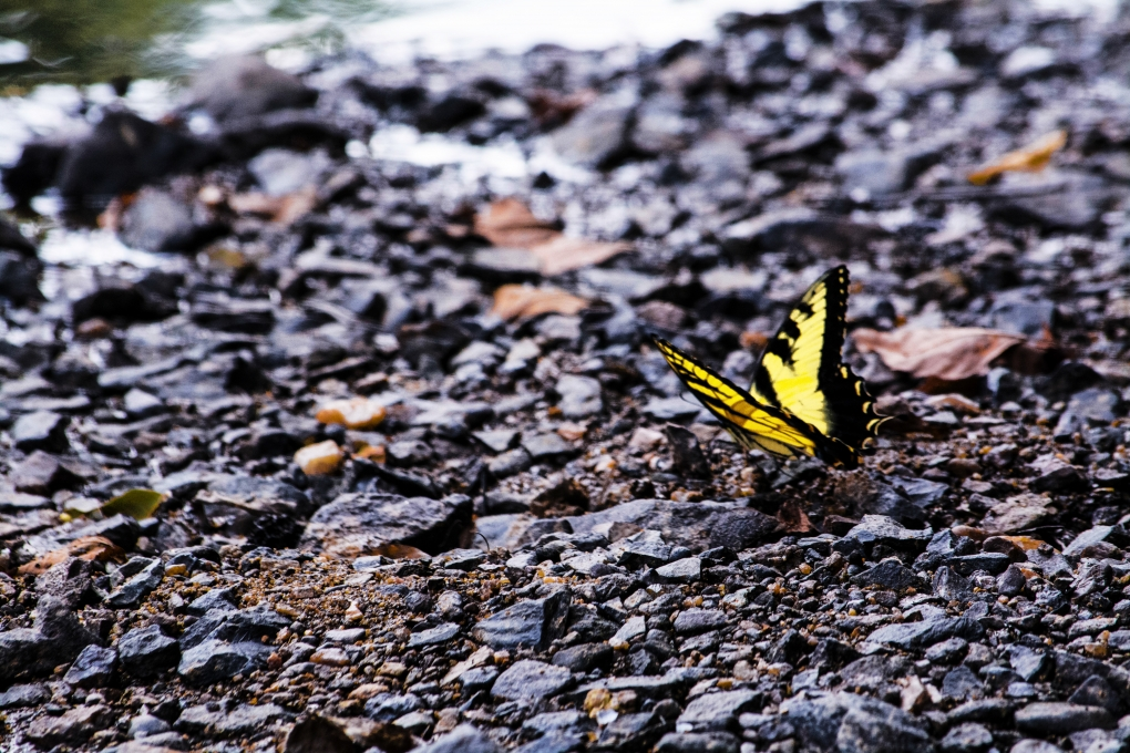 Butterfly Along the Eno by Larry McGill