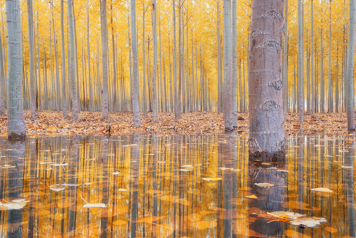 Fall Reflections by Terence Leezy