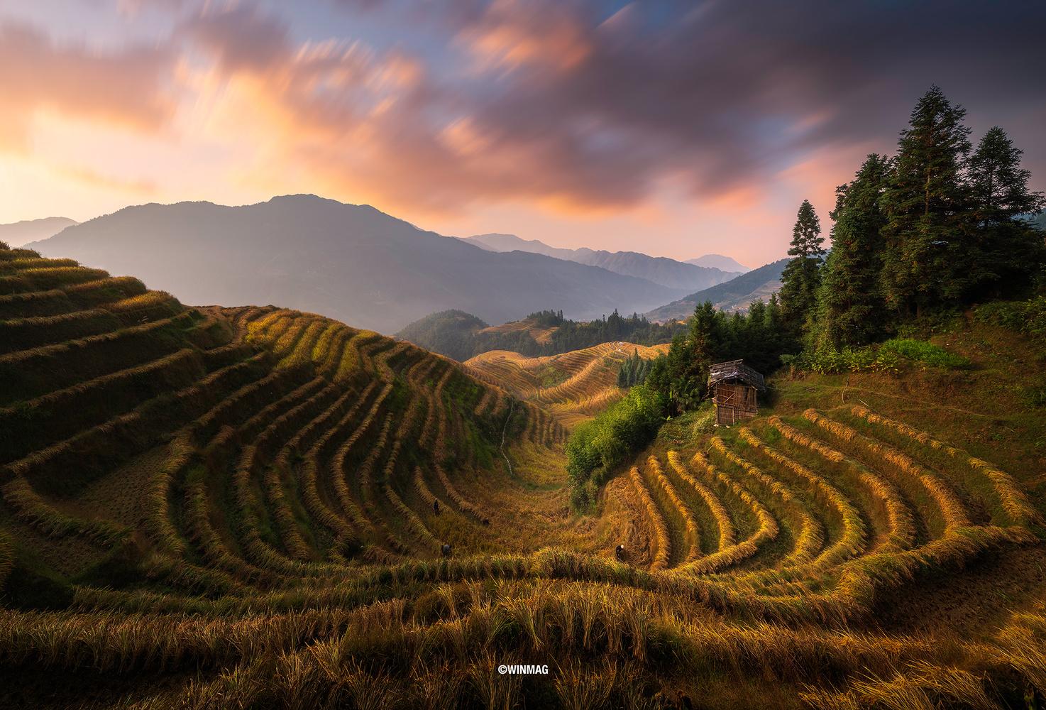 Longji Rice Terraces by Win Mag